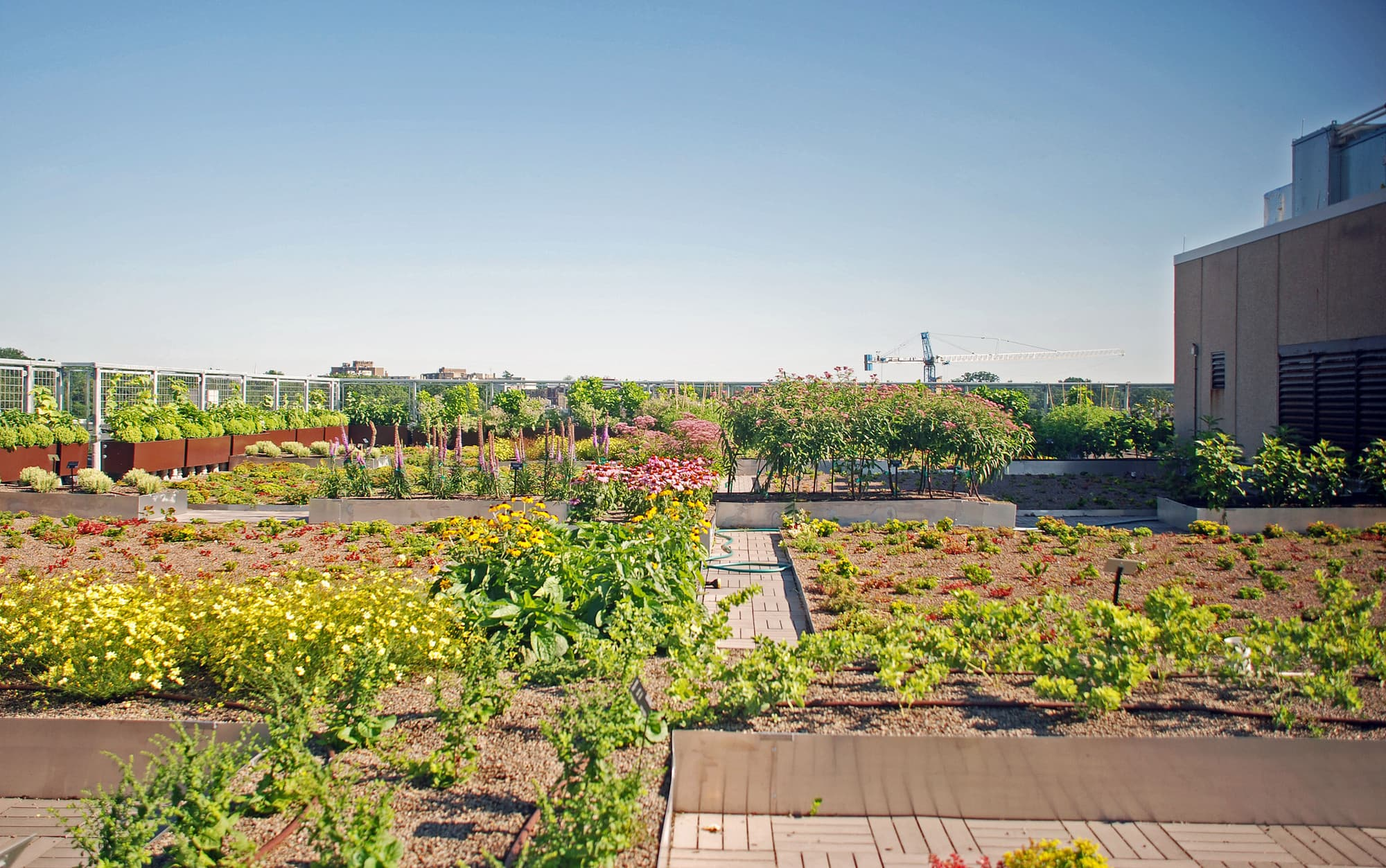The UDC Green Roof
